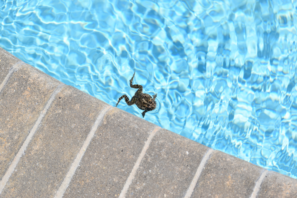 pool frog prevention methods