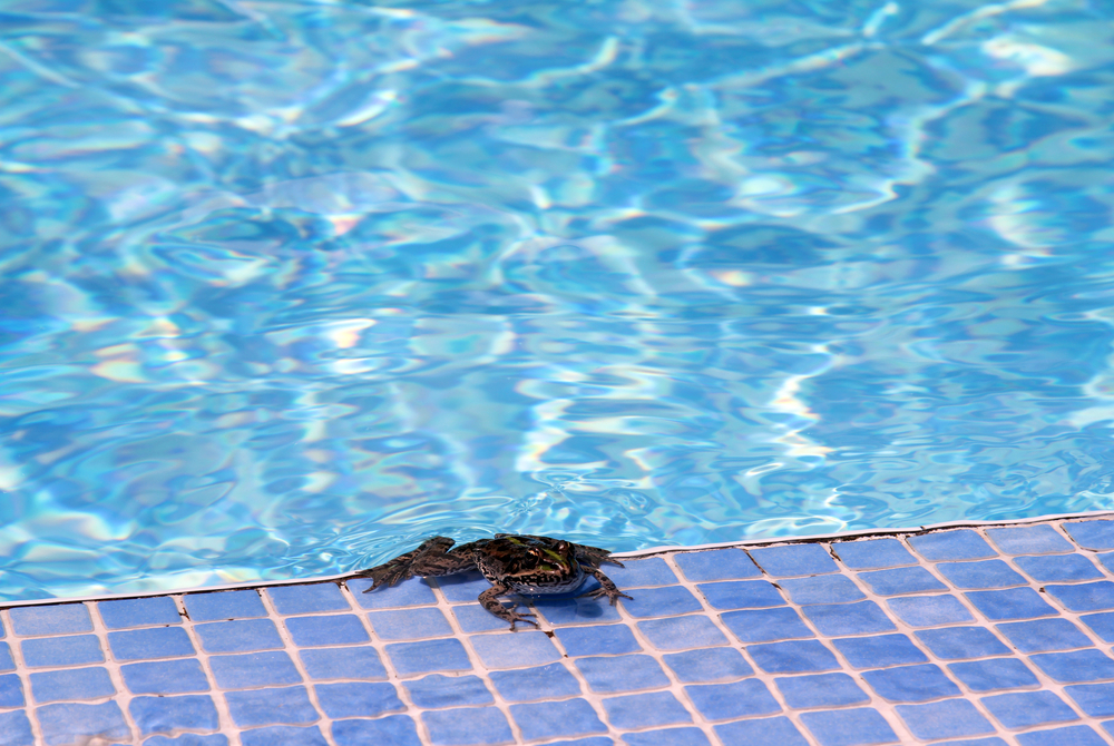 pool frog prevention fencing